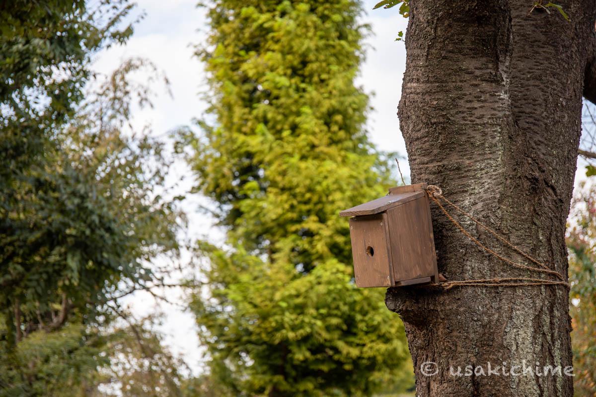 大宮花の丘農林公苑「和風園地」巣箱