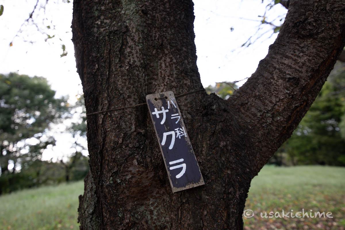 大宮花の丘農林公苑「桜の樹(バラ科サクラ)」