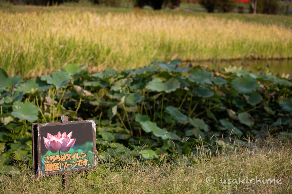 大宮花の丘農林公苑「ビオトープ」