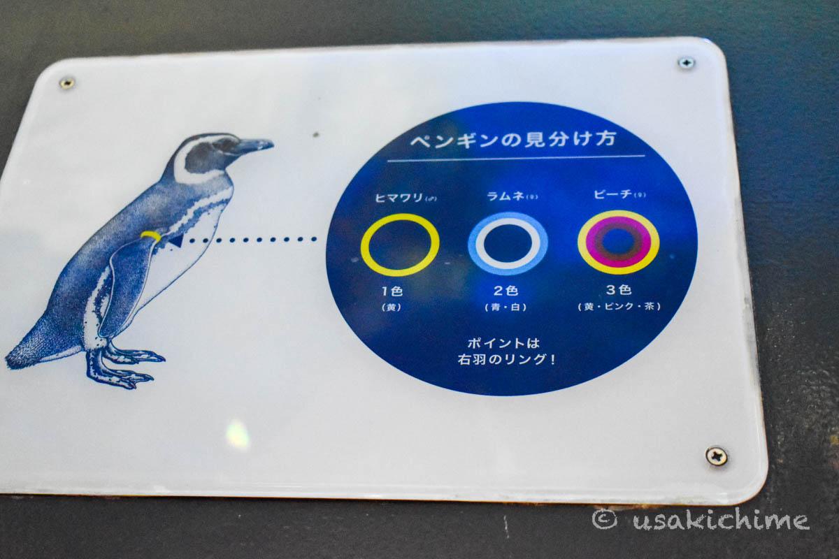 すみだ水族館 ペンギンエリア