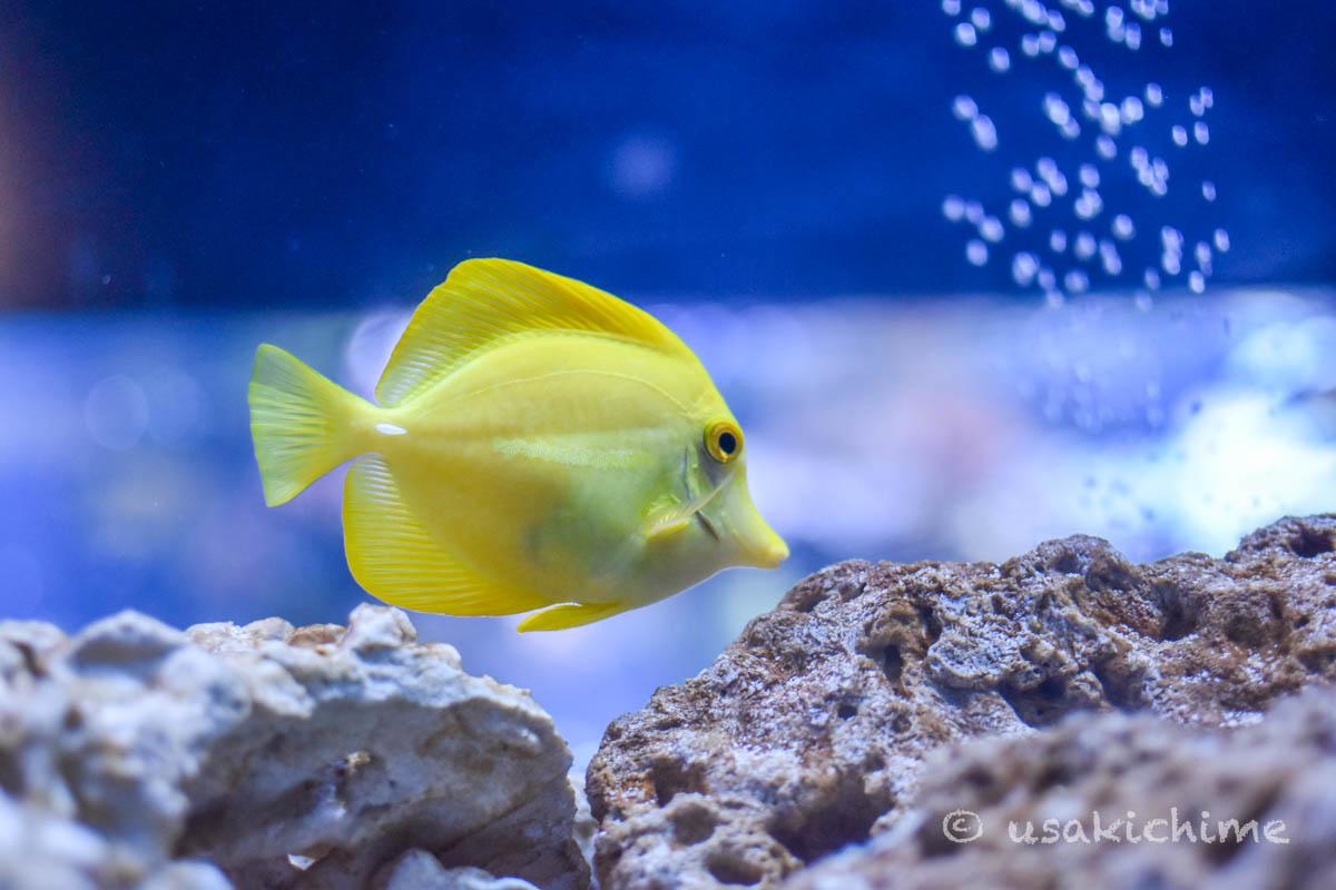 すみだ水族館 サンゴ礁・チンアナゴ水槽